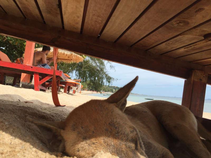 Een foto van een slapende hond op een privé strand op Koh Phagnan.