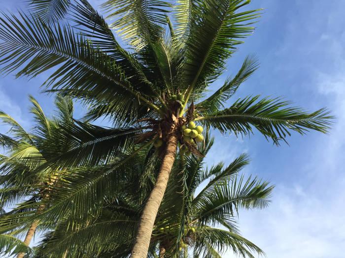 Foto van een palmboom op het strand van Bangsaen