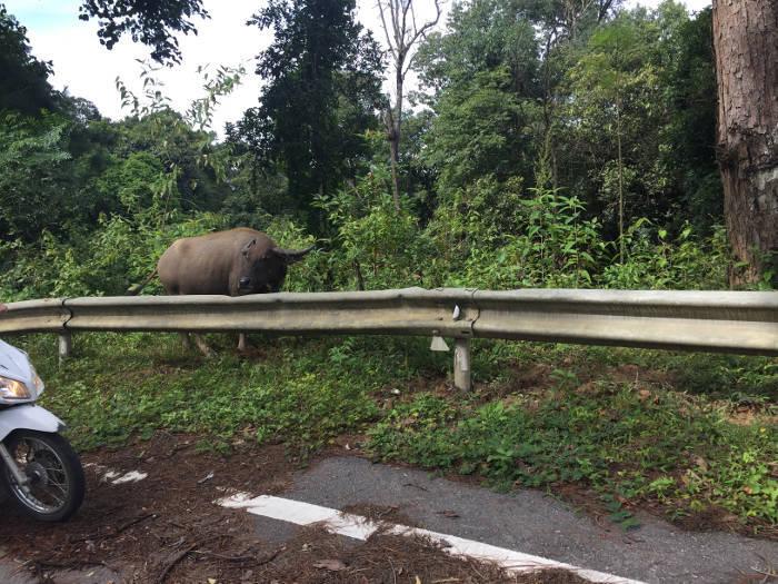 Afbeelding van wilde dieren op route 1095 de weg van Chiang Mai naar Pai.