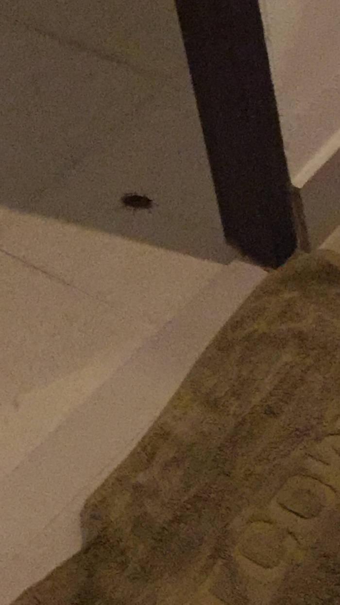 Eigen ervaring met een kakkerlak.