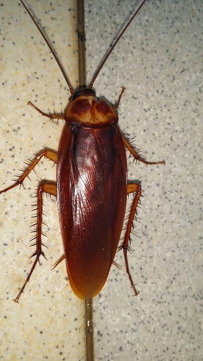 Foto van een kakkerlak