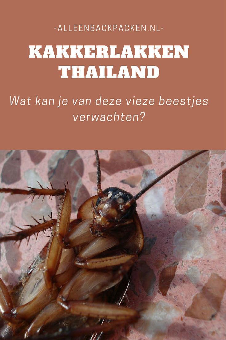 Kakkerlakken Thailand - Wat kan je van deze vieze beestjes verwachten?