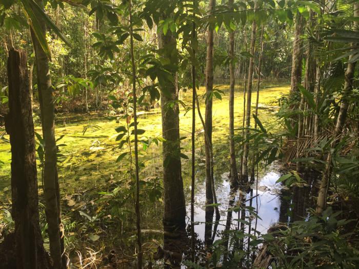 Afbeelding van de omliggende natuur van de Emerald pool.