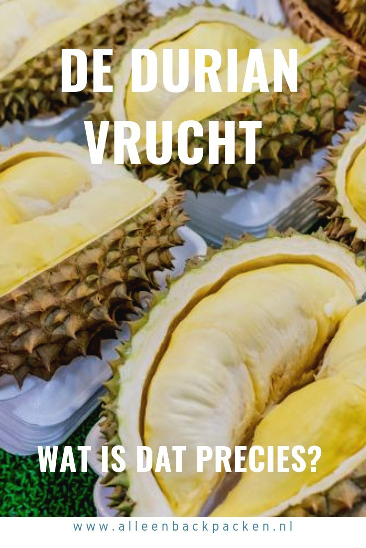 De durian staat bekend om zijn stinkende geur en stekelachtig uiterlijk. Vooral in Aziatische landen wordt de durian gezien als lekkernij en als backpacker die door Azië gaat reizen zal je er dan ook veelvuldig mee in aanraking komen. Wat de durian nou precies is, waar deze vandaan komt, waarom de durian verboden is en of je durian samen met alcohol kan eten, dat lees je hier. #durian #WatIsDurian #WatIsEenDurian #DurenEten #DurianInAzië #DurianEnAlcohol #DurianEnCola #WaaromIsDurianVerboden
