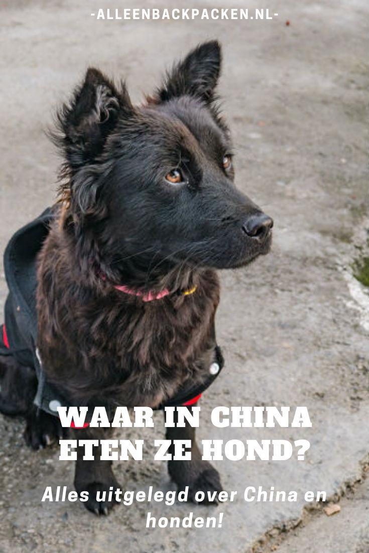 Waar in China eten ze hond? Alles uitgelegd over China en honden!