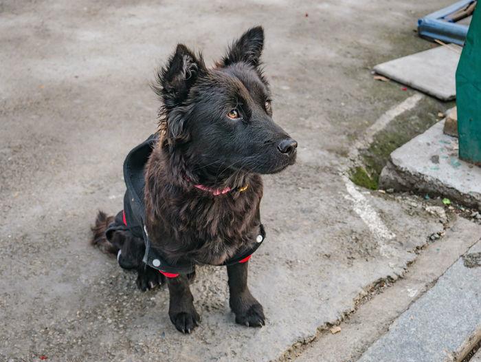 Zwarte hond op straat in China